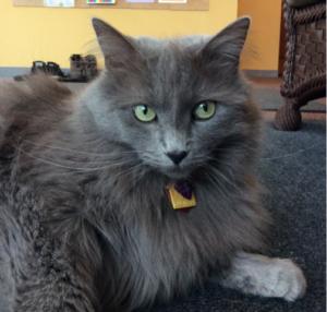 Creative Cat Care at Creative Care & Wellness Center
